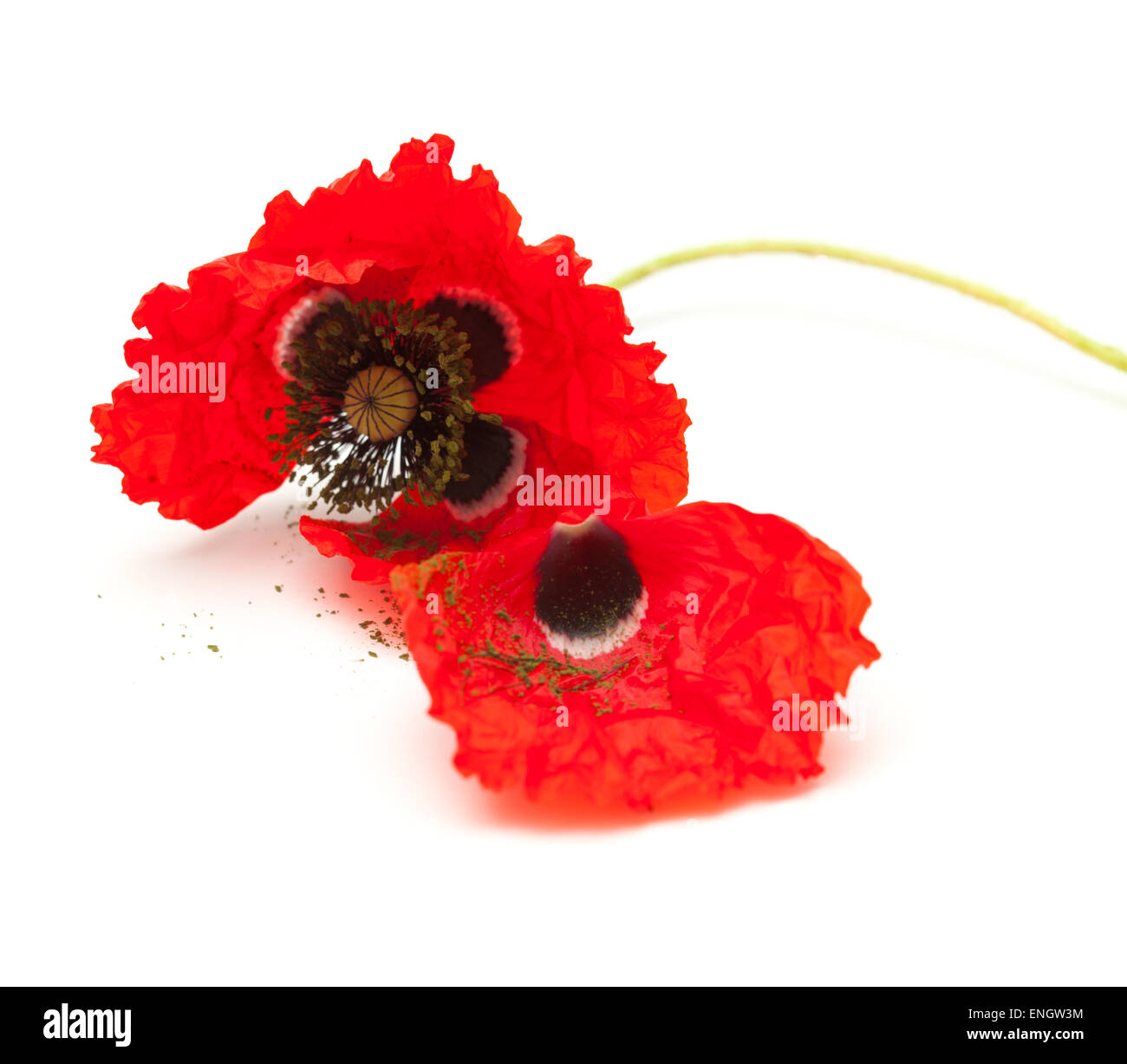 Poppy Stems Petals Cut Out Stock Images Pictures Alamy
