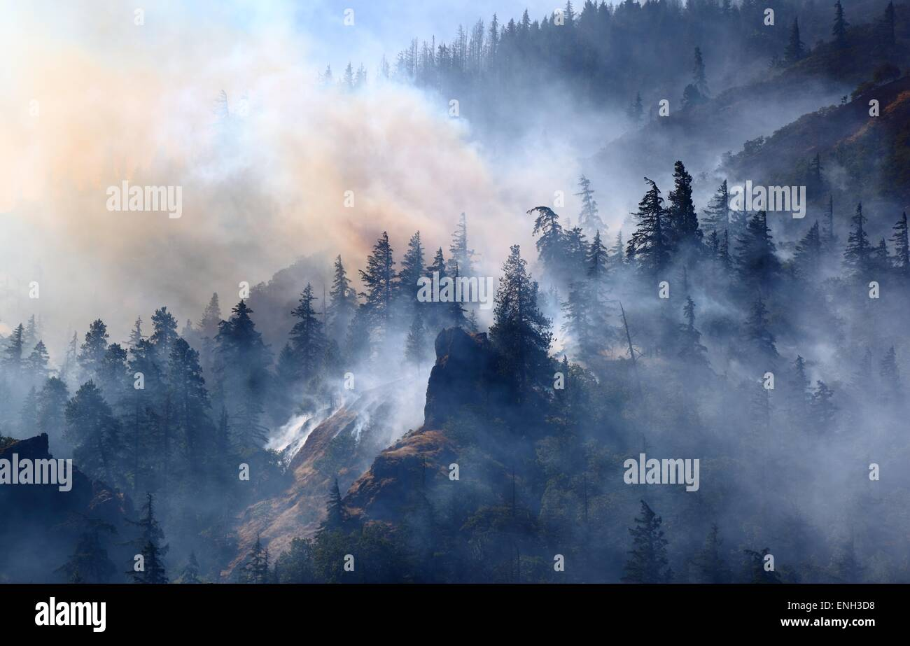 Forest Fire - Stock Image