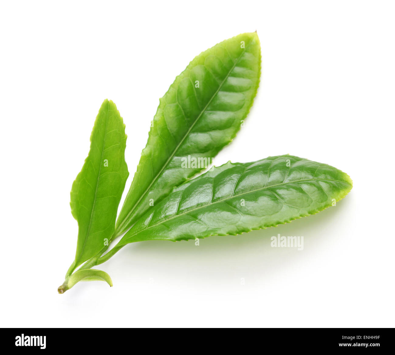 Japanese green tea first flush leaves isolated on white background - Stock Image