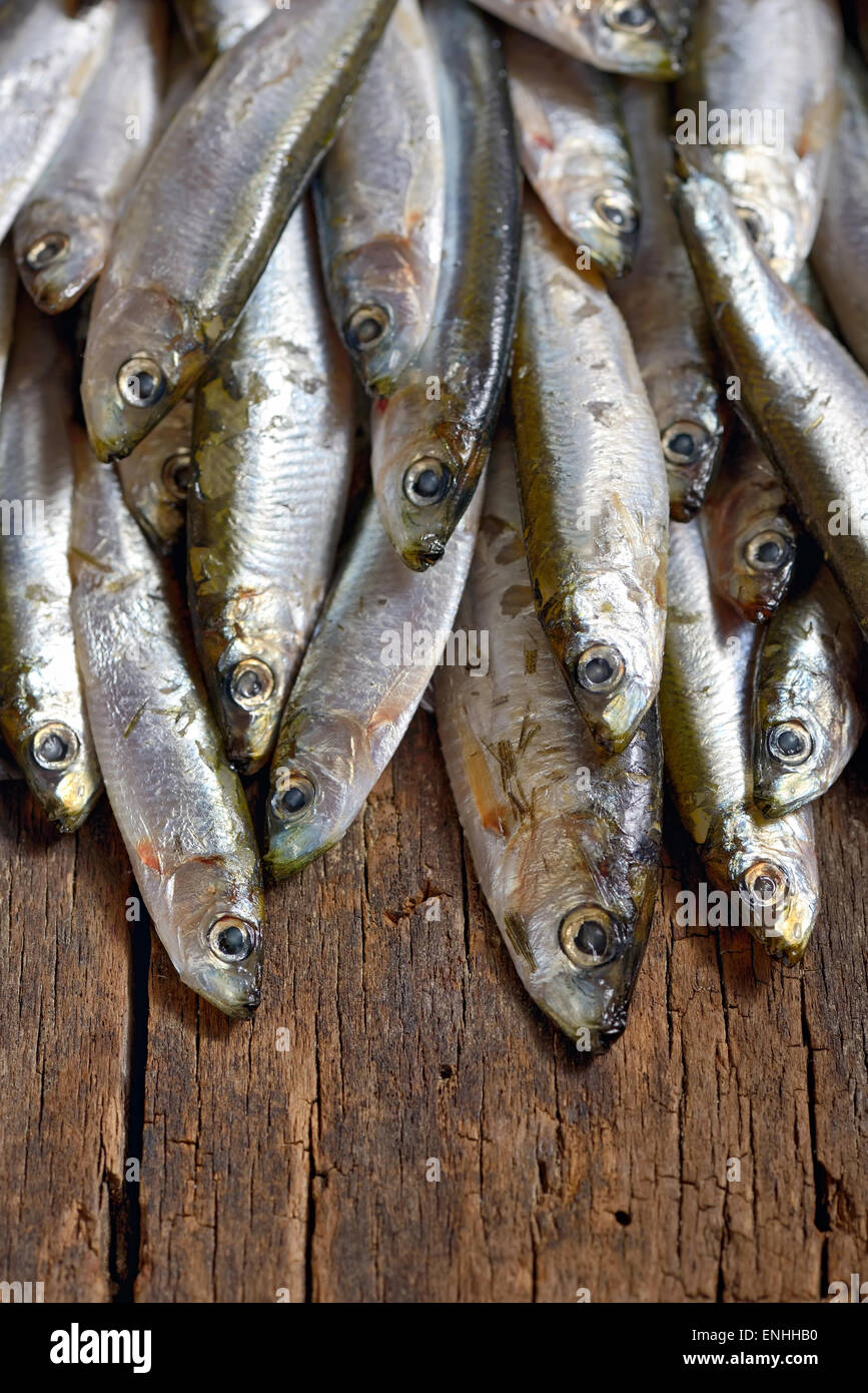 Heap of small fresh anchovies - Stock Image