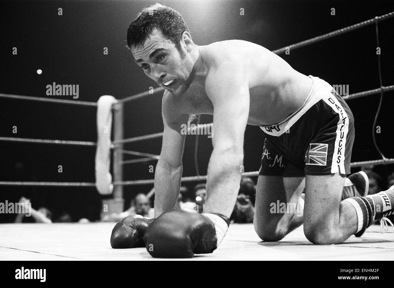 Boxer Alan Minter knocked down by Tony Sibson 1981 before losing fight. *** Local Caption *** 00130189 - Stock Image