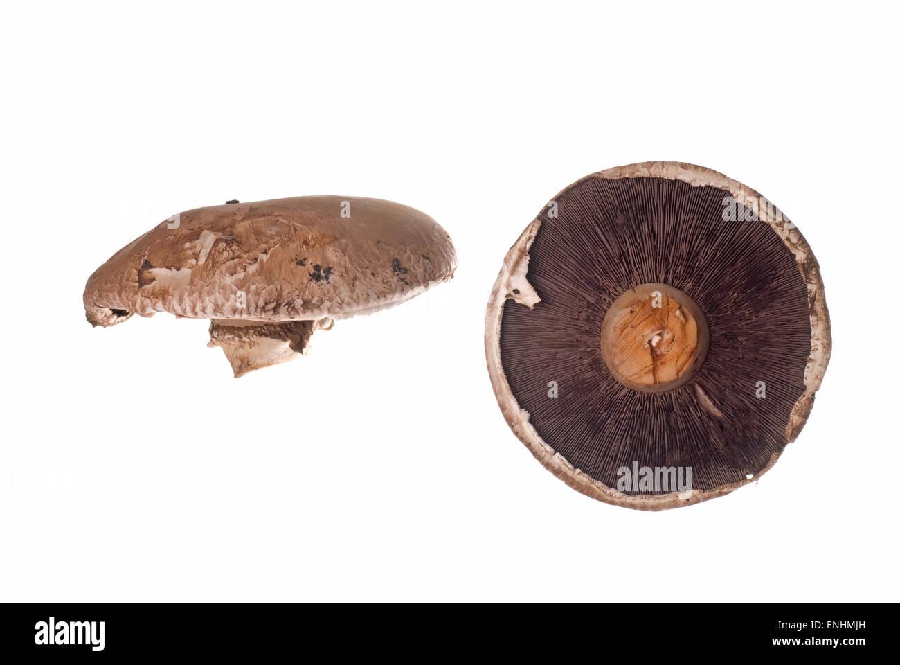 Mushroom on white background. - Stock Image