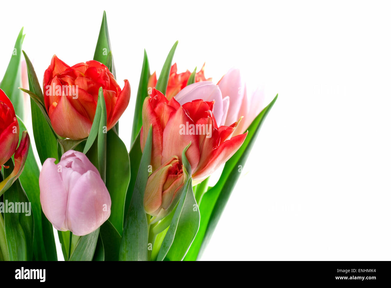 Bouquet tulips close up. Copy space. - Stock Image
