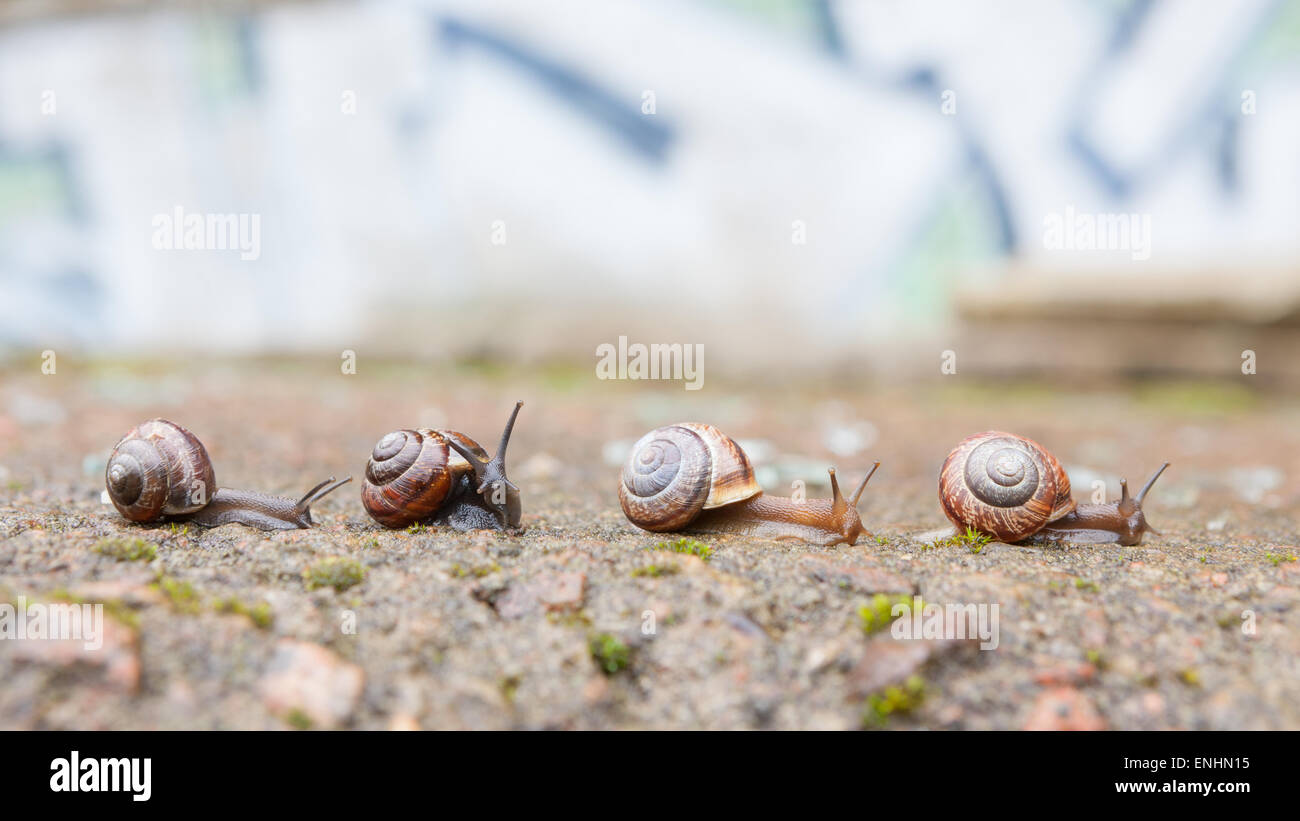 Group of small snails going forward - Stock Image