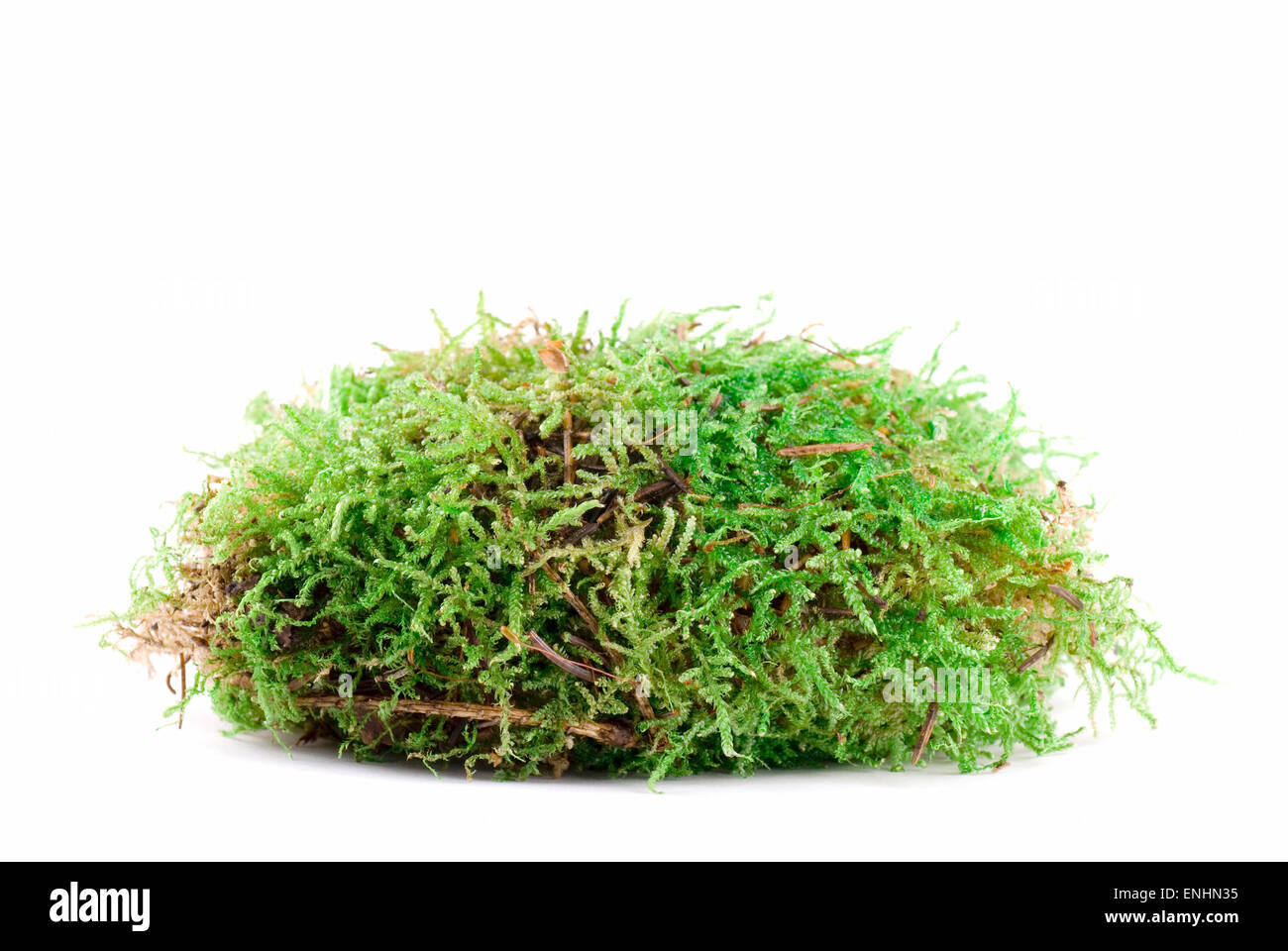 Green moss pillow on white background. - Stock Image