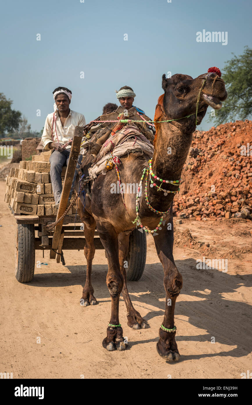 A camel and cart loaded with newly made bricks at a brick works in Uttar Pradesh, India - Stock Image