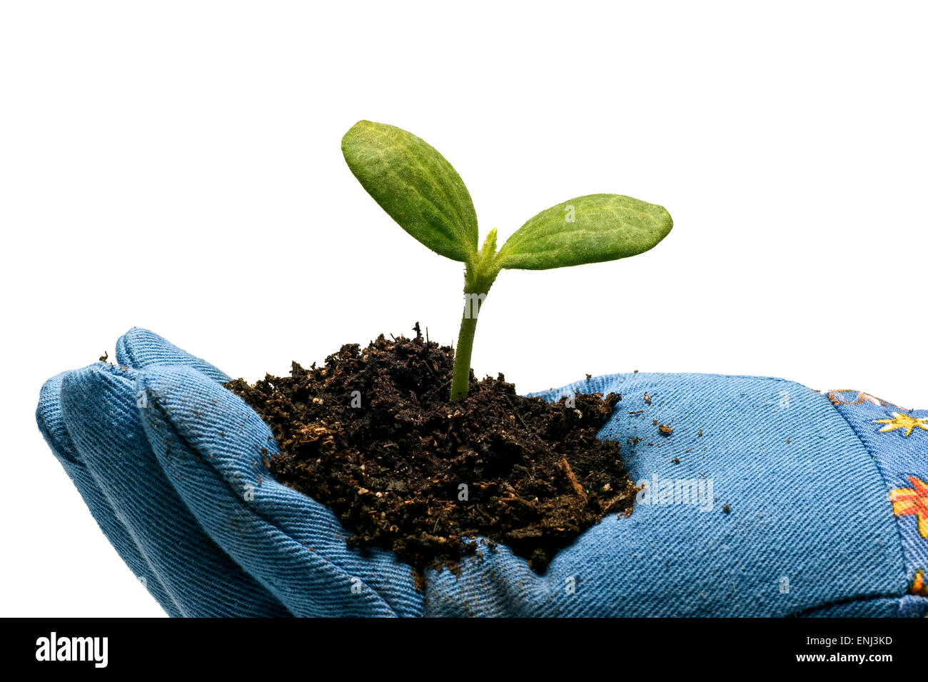 Time To Plant Young Seedling - Stock Image