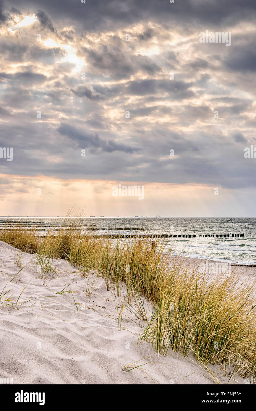 Picture of the coast of the Baltic Sea on a stormy day with dune grass and dark clouds in the evening - Stock Image