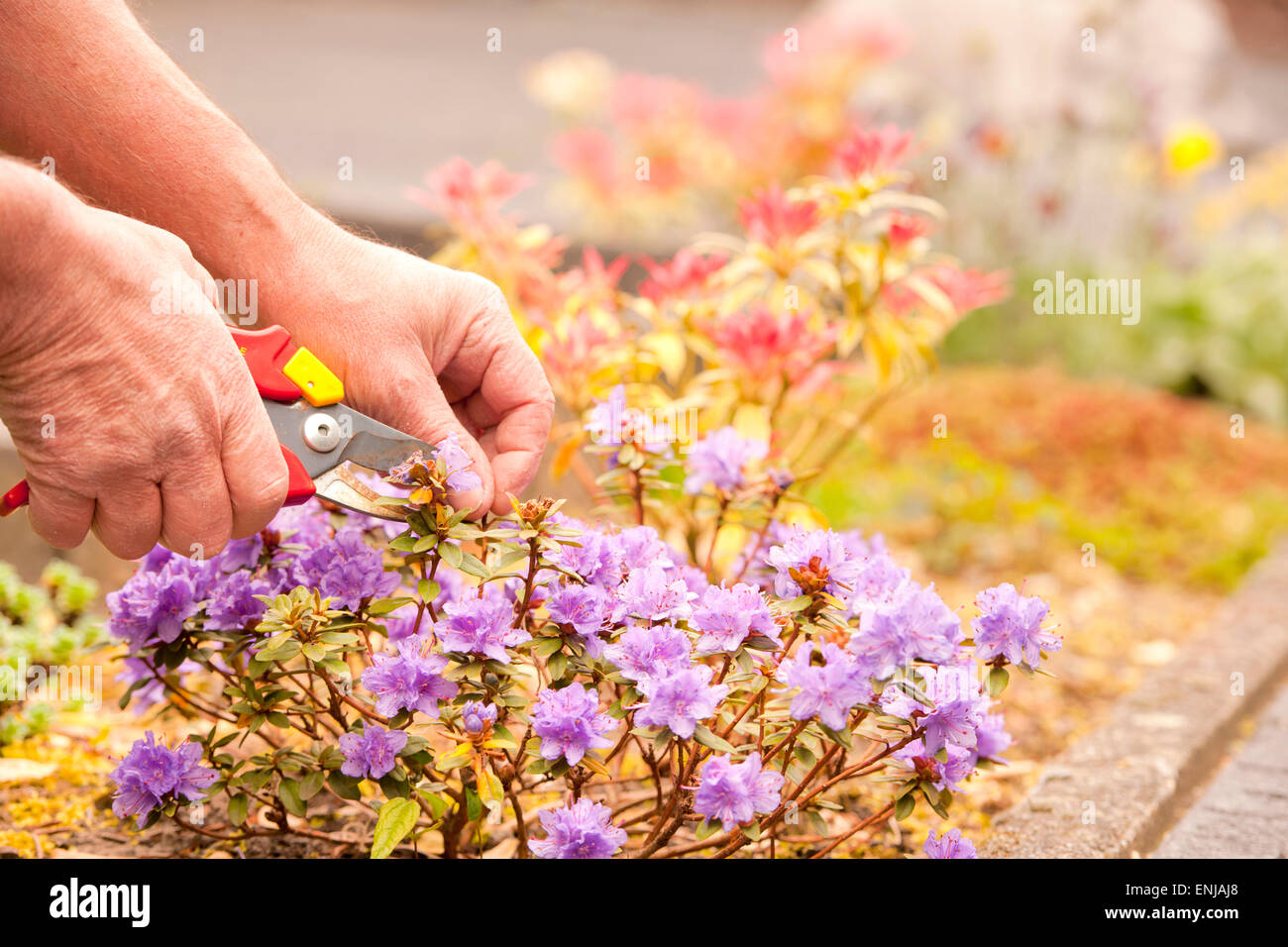 perform maintenance in the garden - Stock Image