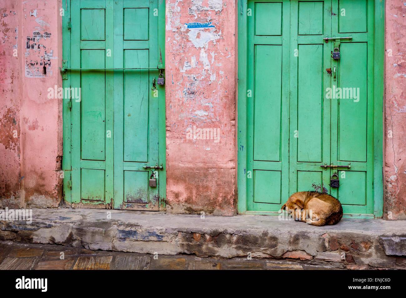 Dog sleeping in Kathmandu, Nepal - Stock Image