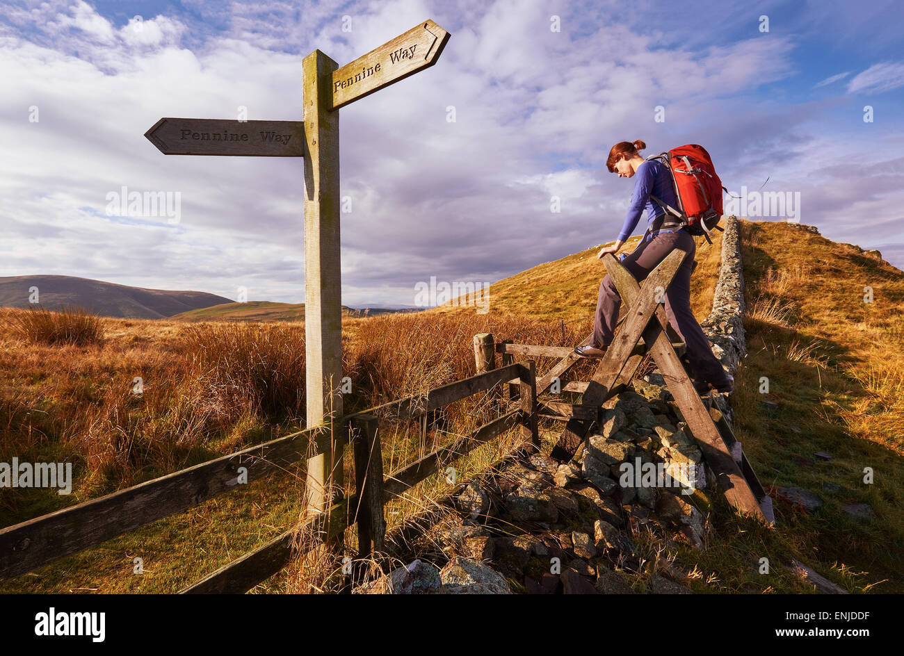 A woman crossing a stile on the Pennine Way, English Countryside walk.UK - Stock Image
