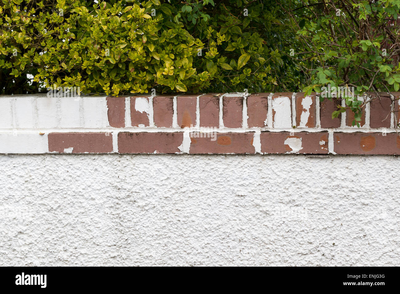 frost and weather damage to painted garden boundary wall - showing peeling paint and frost damage to bricks - Stock Image
