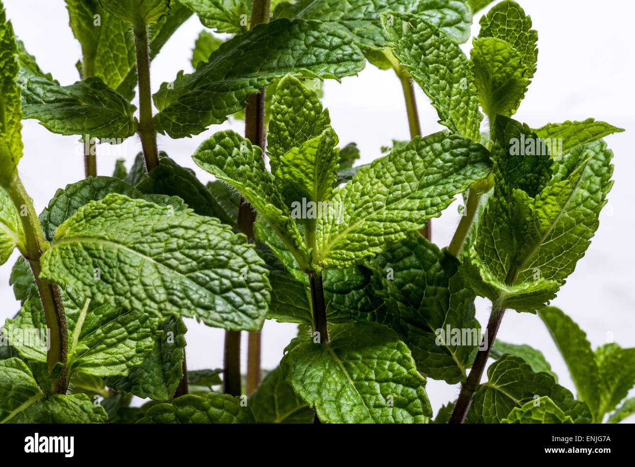 Herbs spices verdure health healthy food nutrition salad enrichment diet on white without background cutout cut - Stock Image