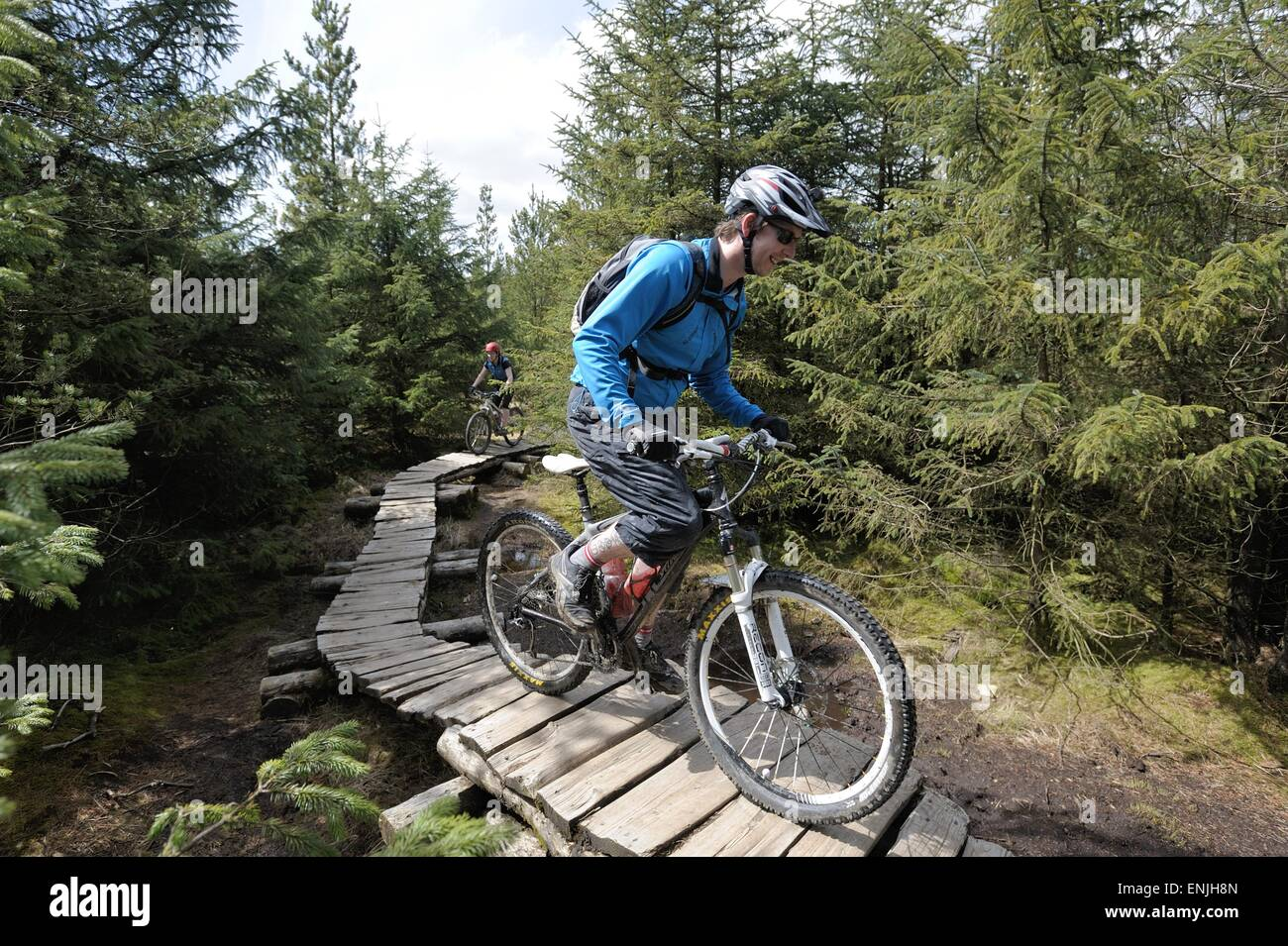 Mountain bikers on a boardwalk section in Gisburn Forest - Stock Image