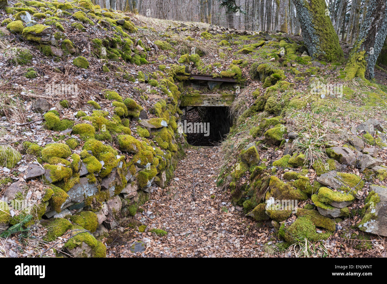Trench, Hartmannswillerkopf, national monument of World War I, Wattwiller, Vosges, Alsace, France - Stock Image
