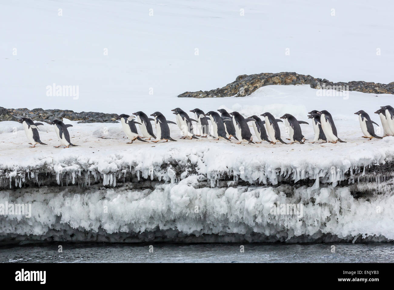Adelie penguins (Pygoscelis adeliae) at breeding colony at Brown Bluff, Antarctica, Southern Ocean, Polar Regions Stock Photo