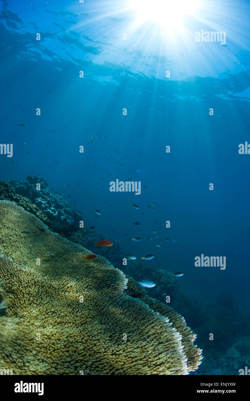 Hard and soft coral landscape scenic at Thetford Reef on the Great Barrier Reef, UNESCO, Cairns, Queensland, Australia - Stock Image