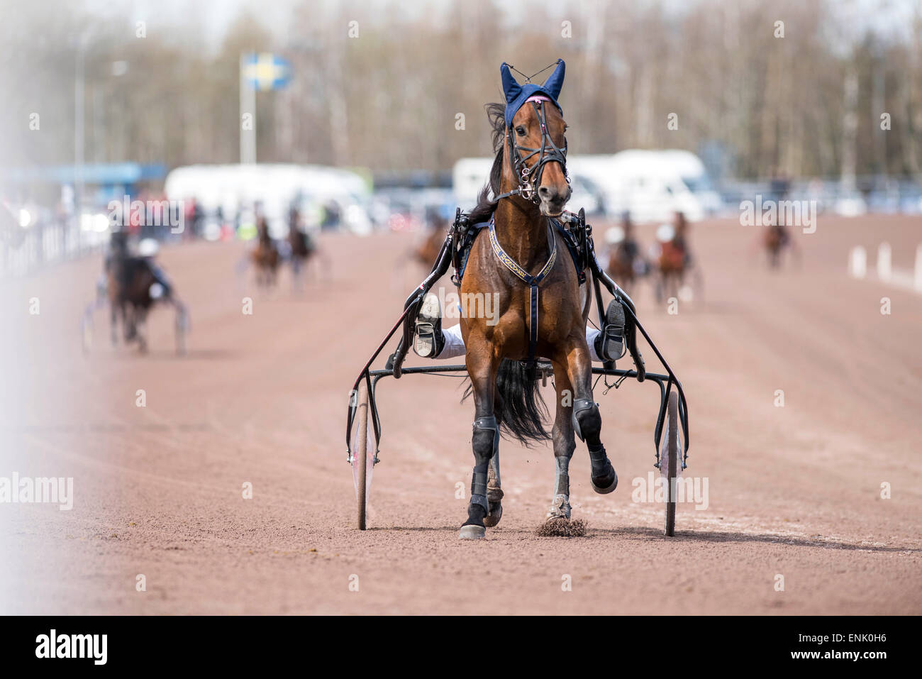 Horse Stylish Hanover is being preparing for a race at Mantorp harness race course. - Stock Image