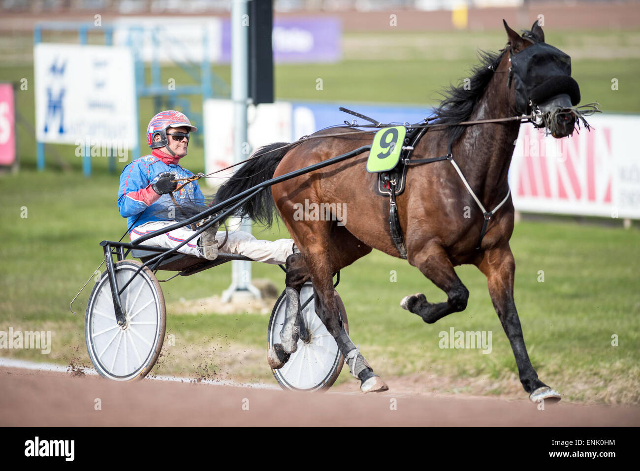 Harness driver Torbjörn Jansson in the sulky preparing Vacqueyras for a race at Mantorp harness race course. - Stock Image