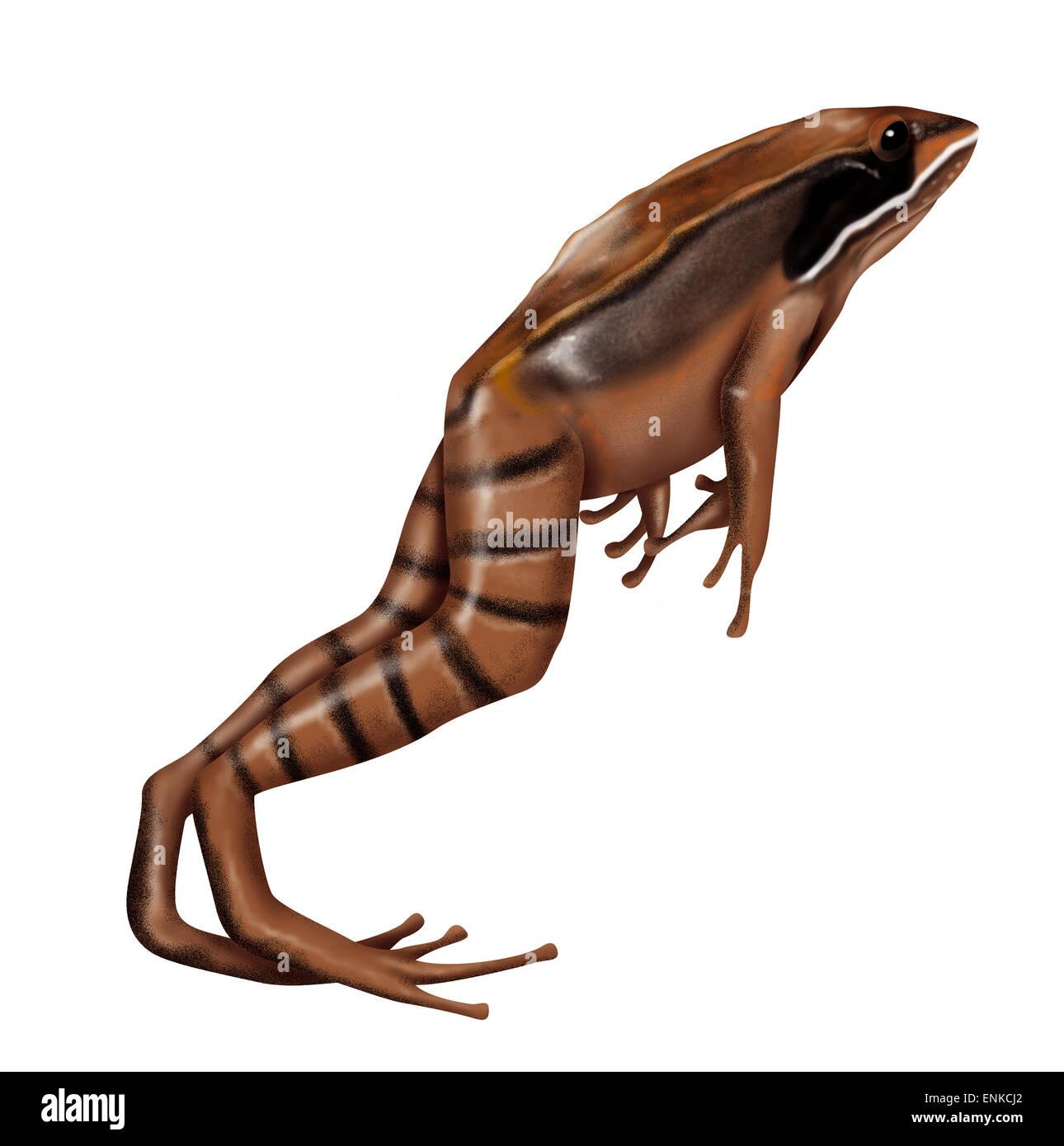 Wood frog - Stock Image