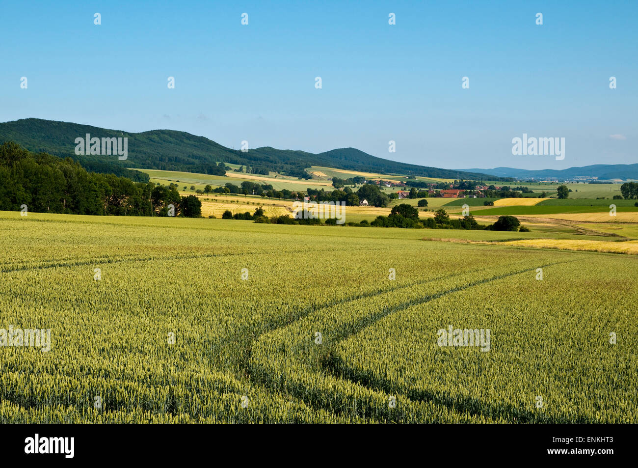 Landscape with fields and hills, Weserbergland, Lower Saxony, Germany - Stock Image