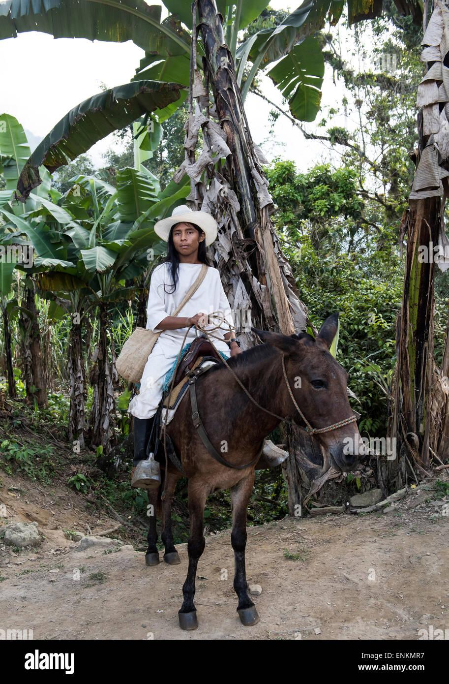 Kogi or Cogui or Kagaba young man on horse  the Lost City (Ciudad Perdida) trek Sierra Nevada mountains Santa Marta - Stock Image