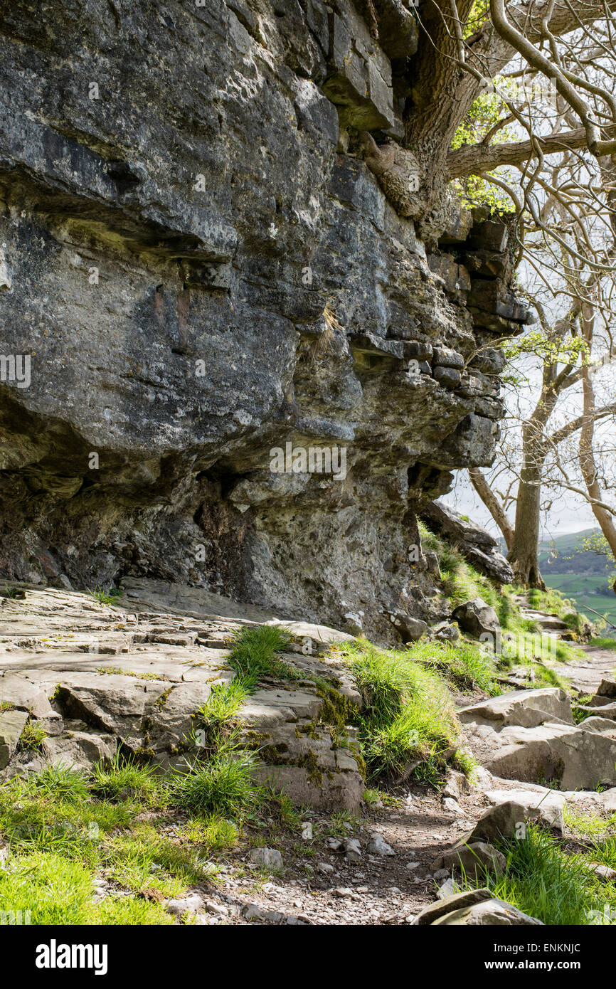A footpath along 440 million-year-old  rocks, Nappa Scars, Austwick, Yorkshire Dales National Park, England, UK - Stock Image