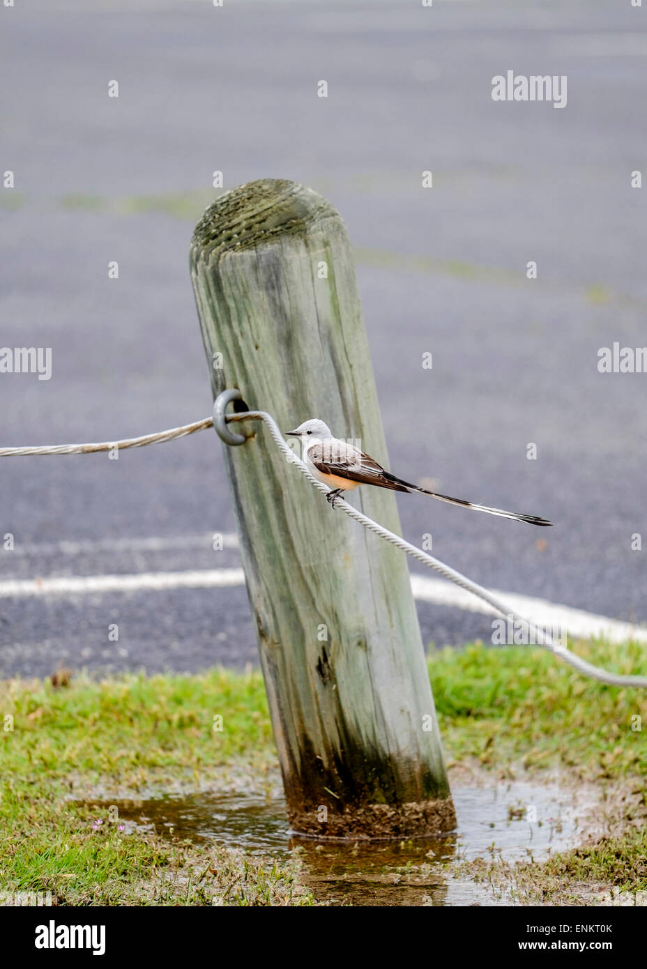 Cable Wire Fence Stock Photos & Cable Wire Fence Stock Images - Alamy