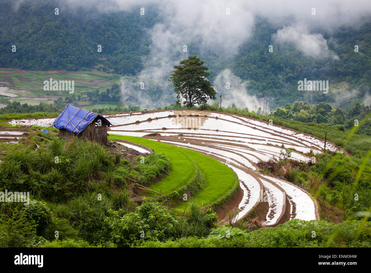 Landscape with terraces for growing rice, Sapa, Vietnam - Stock Image