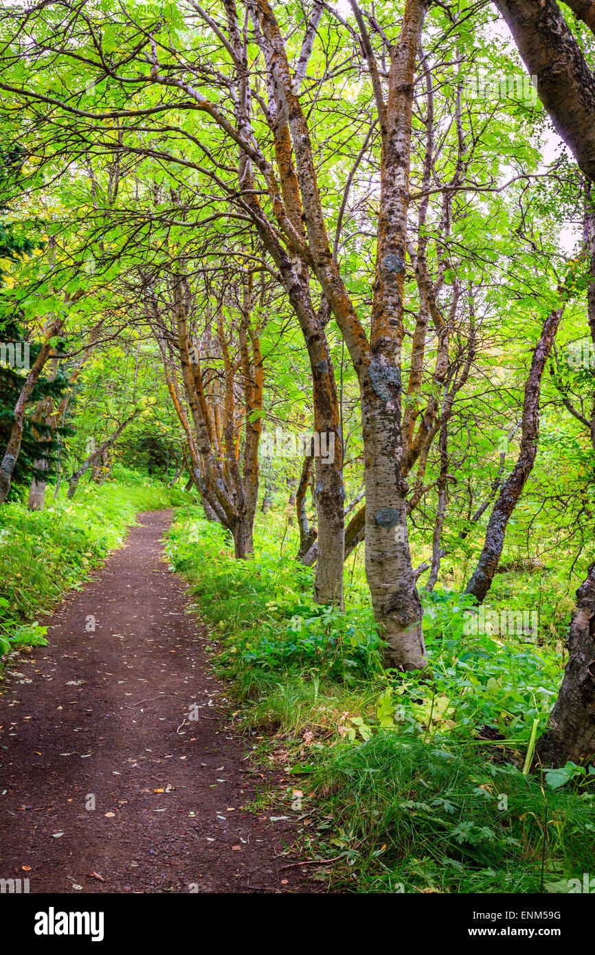 Trail in the woods in Hofdi nature park near Lake Myvatn in Iceland - Stock Image