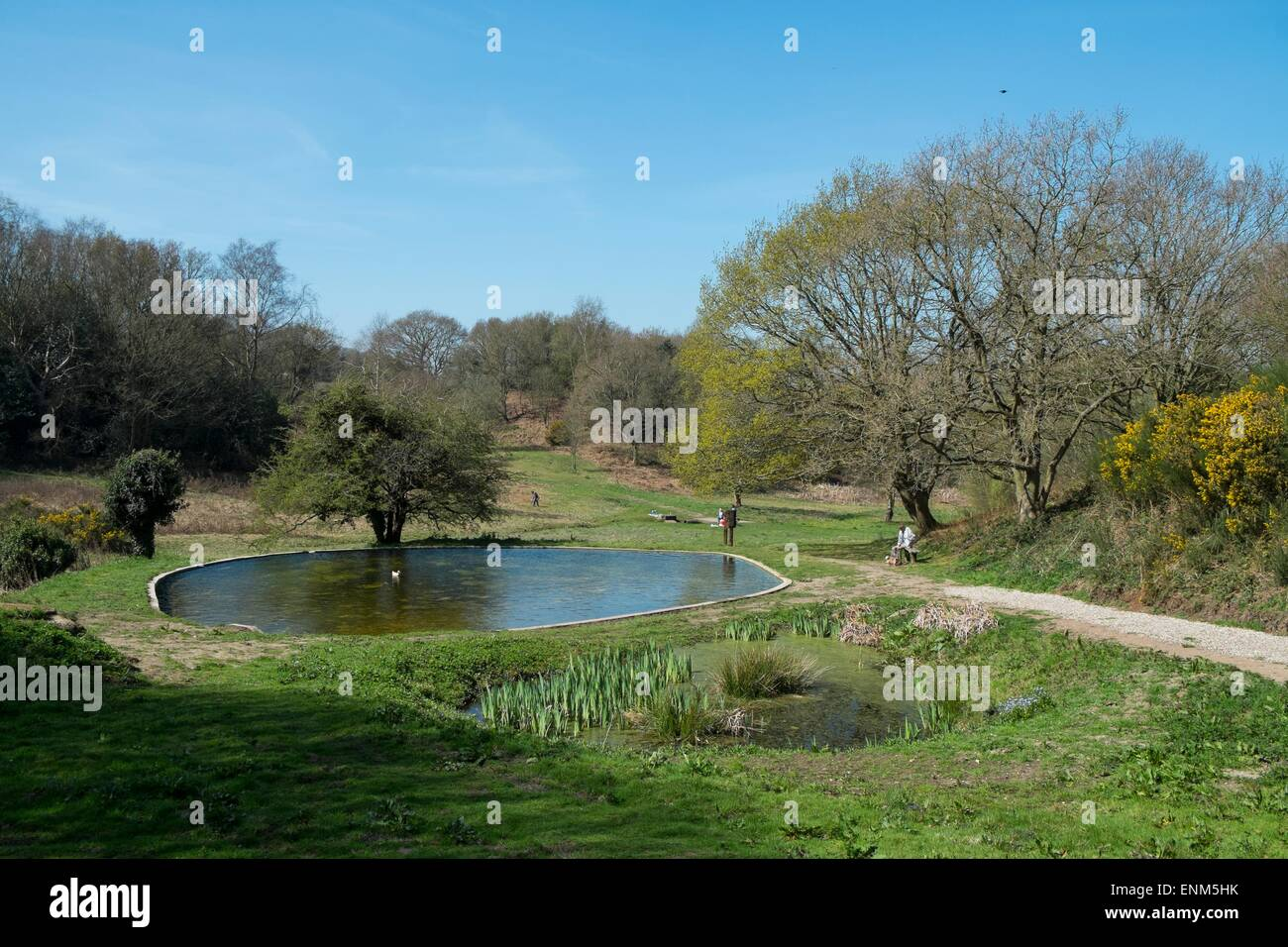Spout Hills or Spouts Common, Holt, norfolk, UK - Stock Image