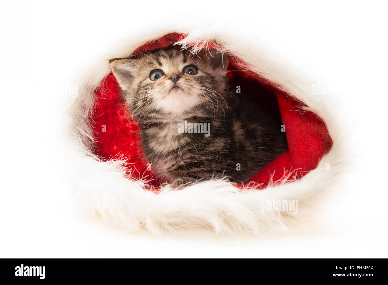 Christmas kitten in Christmas hat high key photo Stock Photo ...