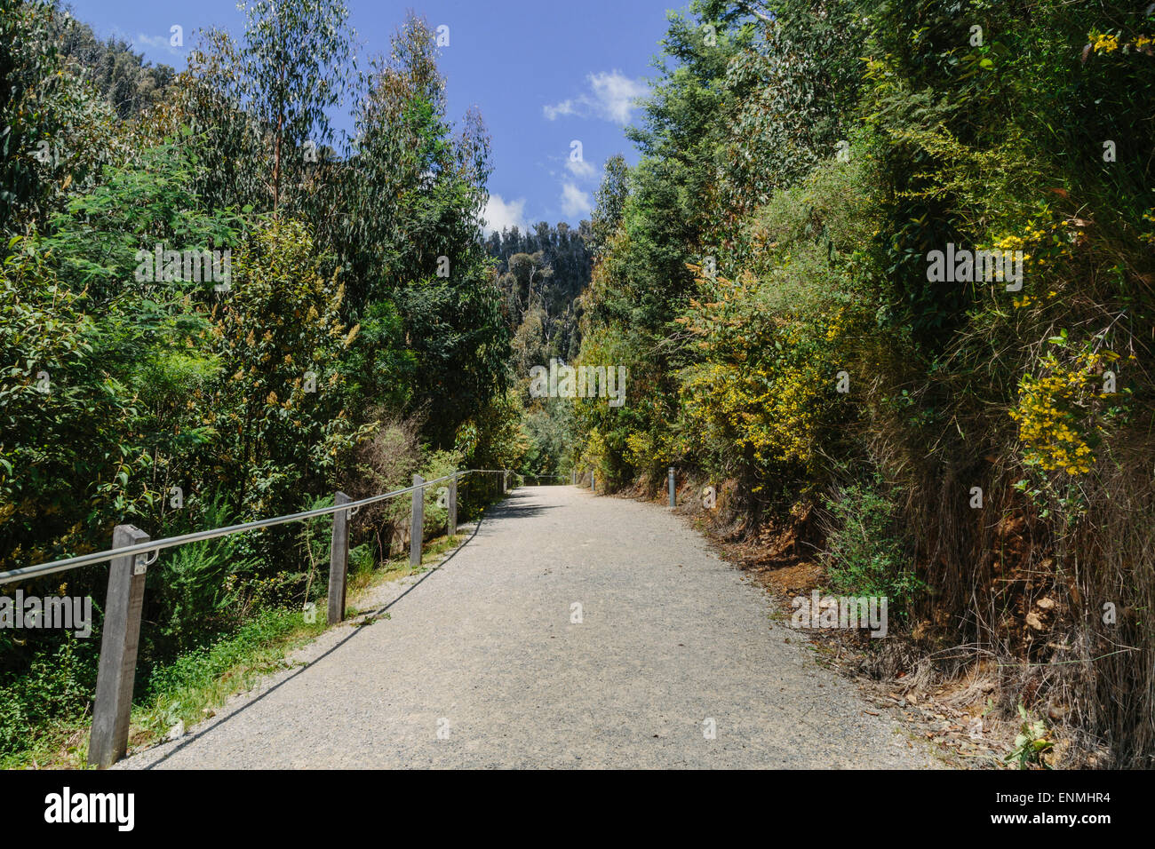 Walking trail to Steavenson Falls near Marysville showing regrowth in surrounding forest after devastating bushfires Stock Photo