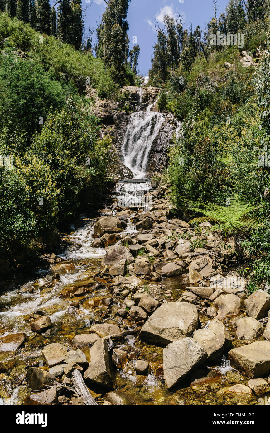 Steavenson Falls near Marysville showing regrowth in surrounding forest after devastating bushfires in 2009 - Stock Image