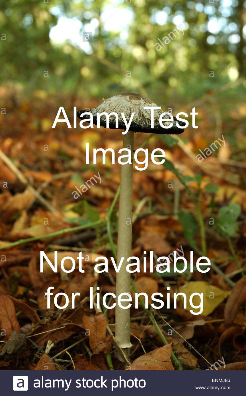 Stock Photo - BH6EG4 ALAMYTESTIMAGE*NOTFORSALE* Read only test. Don't delete - used for monitoring - Stock Image