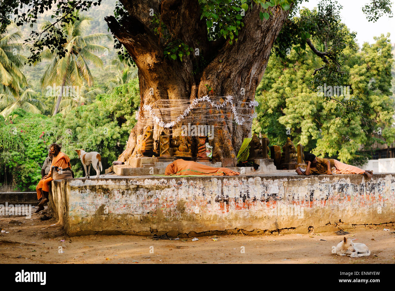 Sadhus resting under a tree after a hard day's work begging from people, Tiruvannamalai. - Stock Image