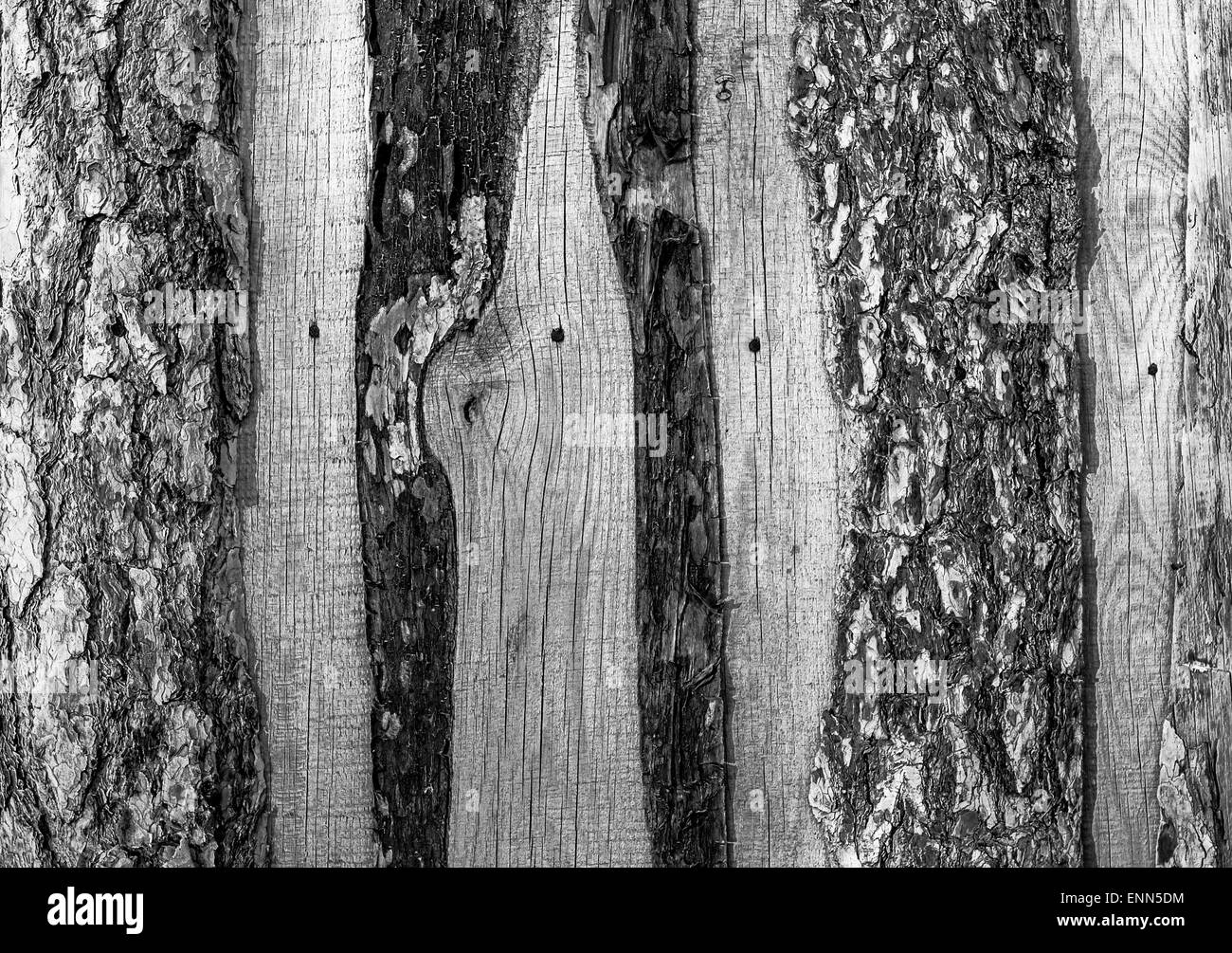 Wooden planks form a rustic fence with nail marks in black and white - Stock Image