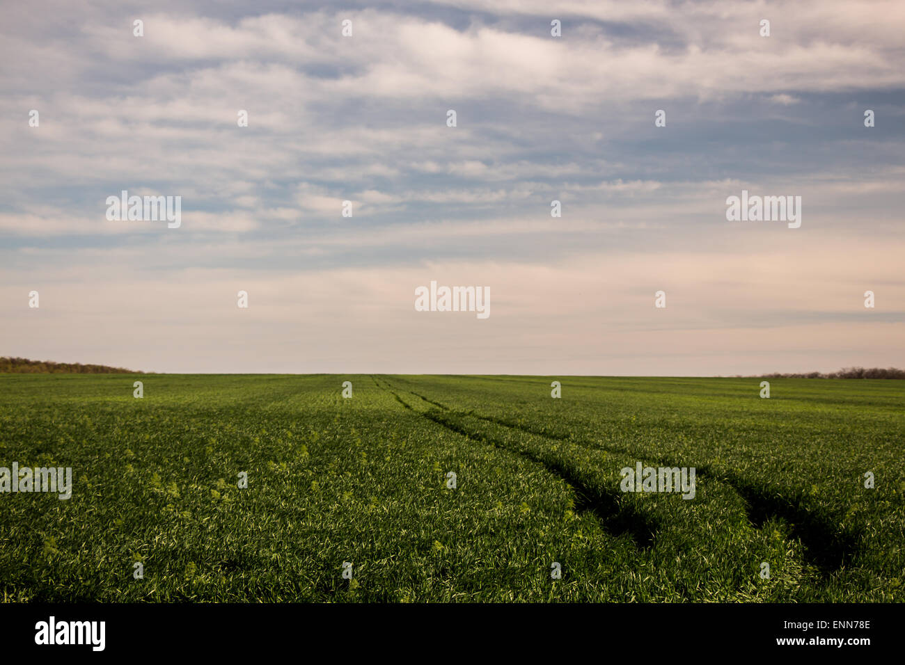 Green agronomy field with cars path - Stock Image