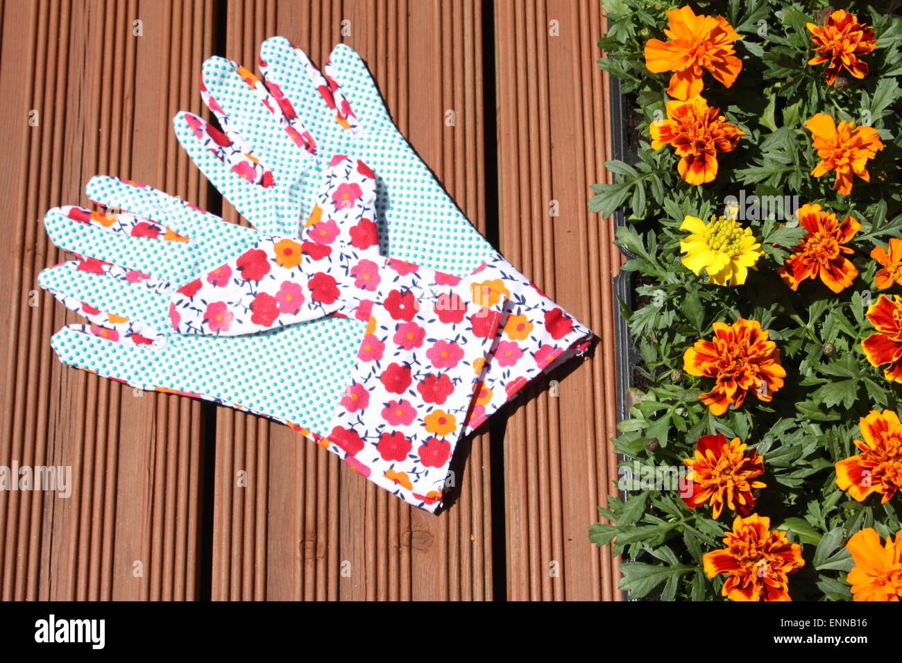 marigold plants with gloves ENNB16
