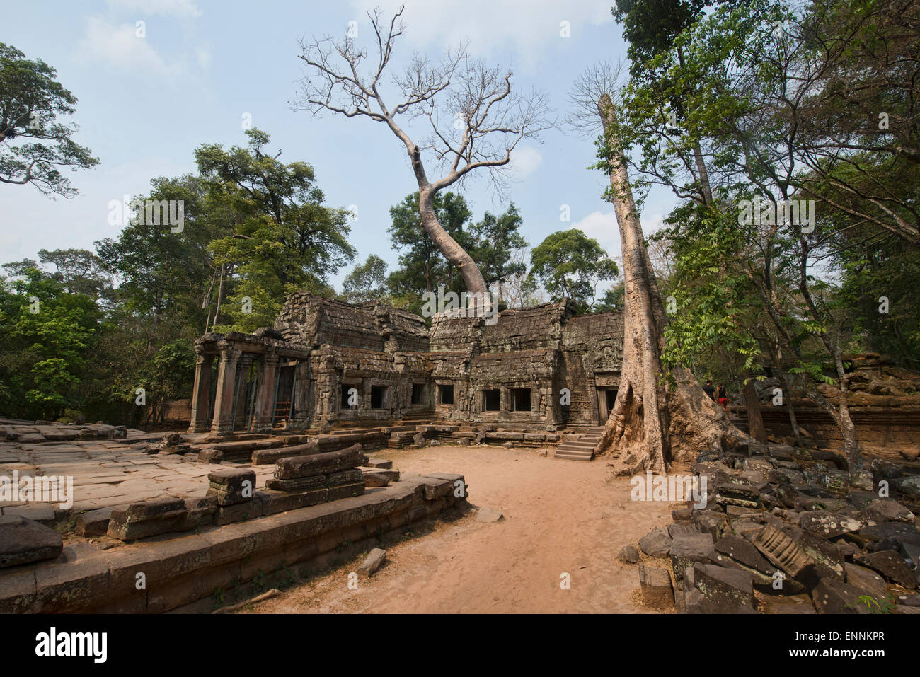 Ta Phrom, the jungle temple at Angkor Wat in Siem Reap, Cambodia - Stock Image