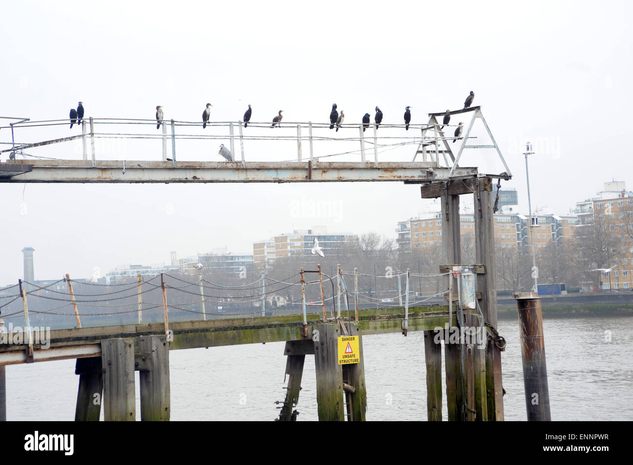 London, UK, 20 March 2015, cormorants on pier at Vauxhall on south bank of river Thames. Stock Photo