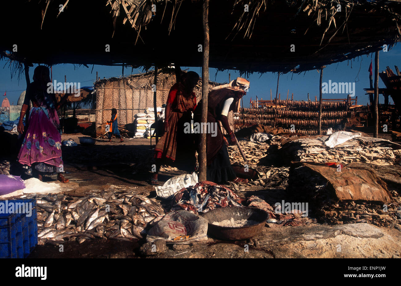 Female workers in the fishing industry in India - Stock Image