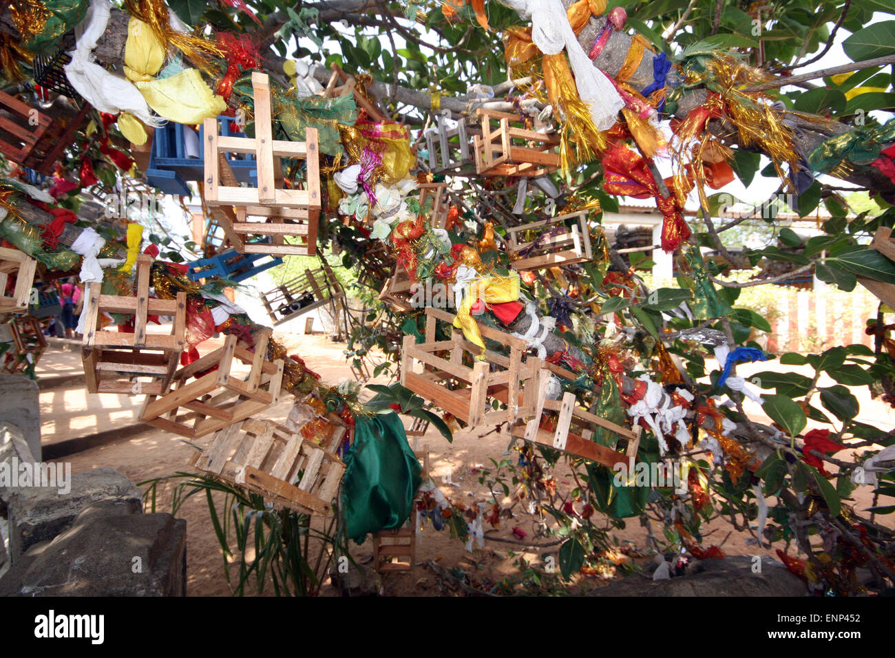 Tree at Swami Rock on which families trying for a baby have hung ribbons, wooden cradles and other offerings to - Stock Image
