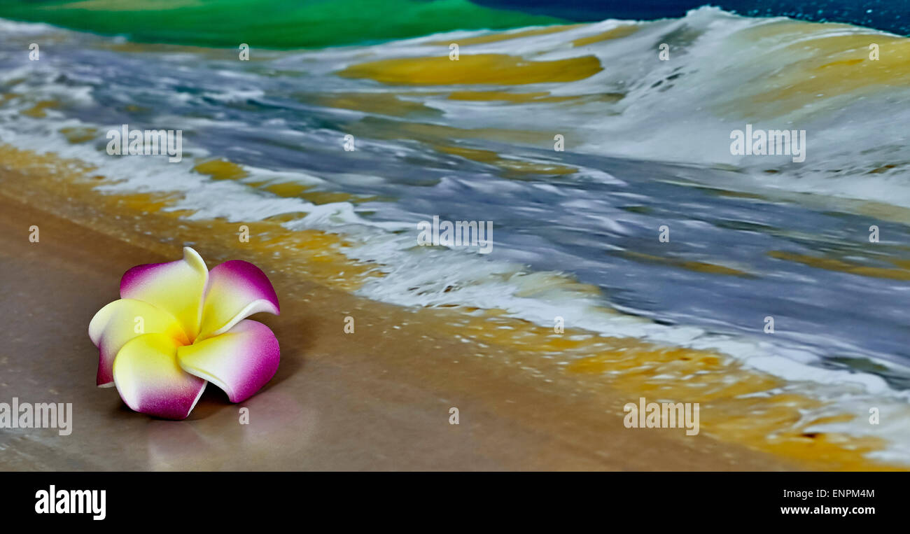 A Pink And Yellow Hawaiian Flower Plumeria Laying On Sand With
