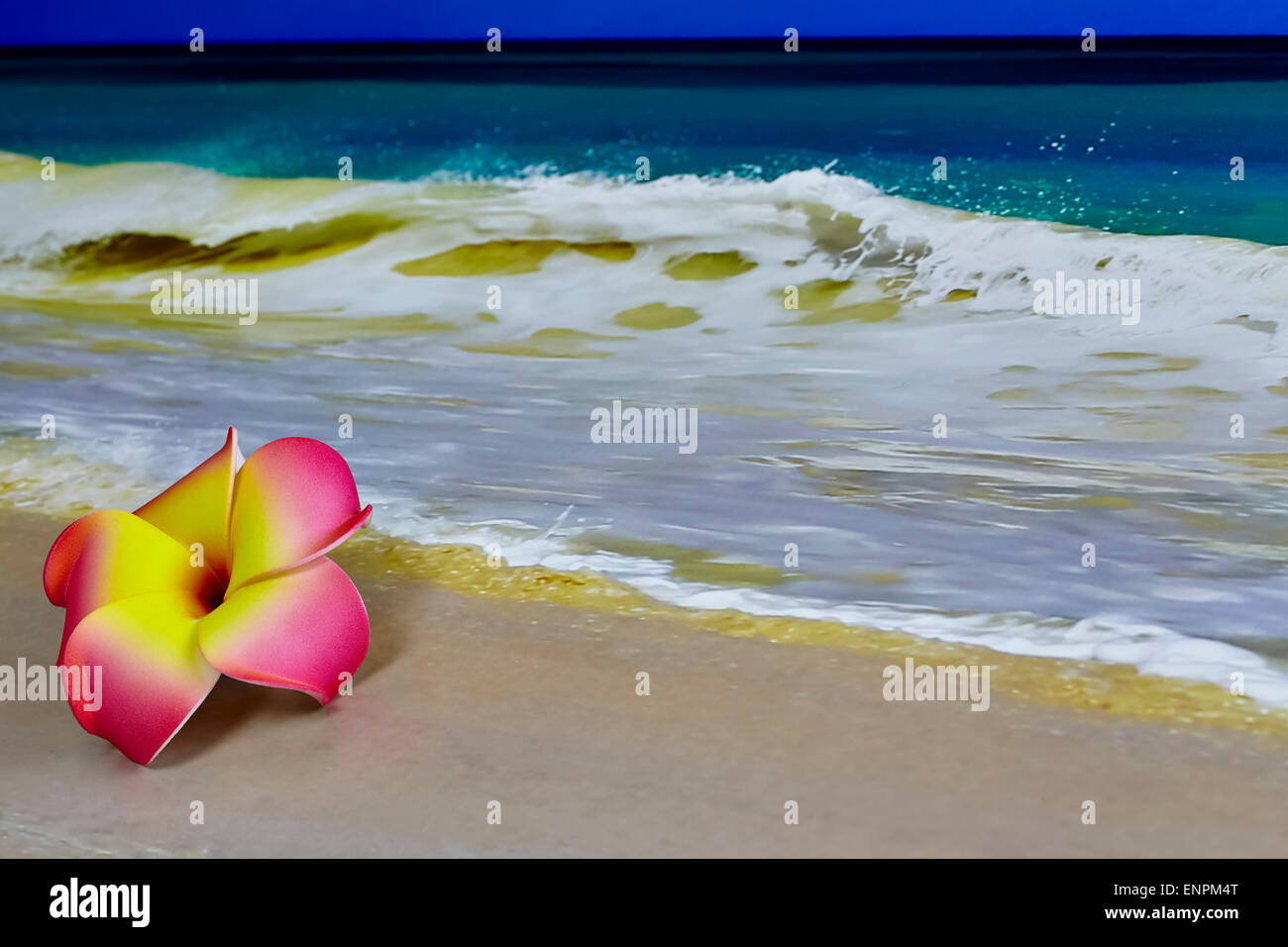 Beach ocean flower plumeria pink stock photos beach ocean flower a pink and yellow hawaiian flower plumeria laying on sand with waves in background izmirmasajfo