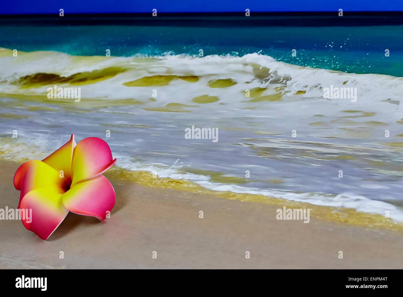 Beach Ocean Flower Plumeria Pink Stock Photos Beach Ocean Flower