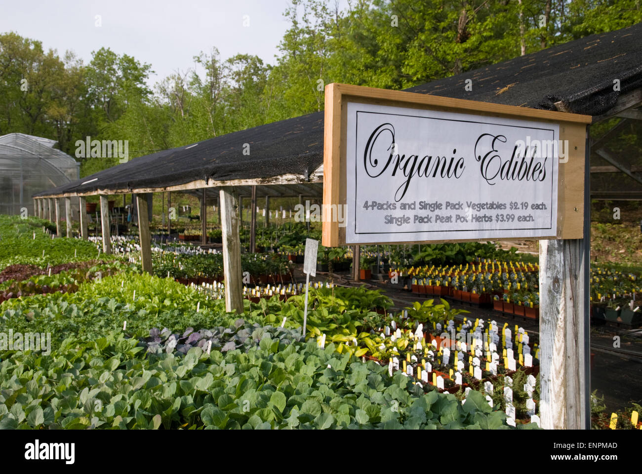 Organic herbs and vegetables plants for sale at a nursery in New York State - Stock Image