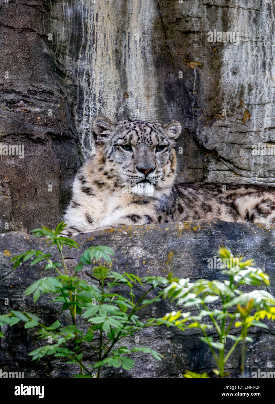 Marwell zoo, Winchester, Hampshire, UK. 10th May, 2015. Taking a look at some of the most vulnerable to the Critically - Stock Image