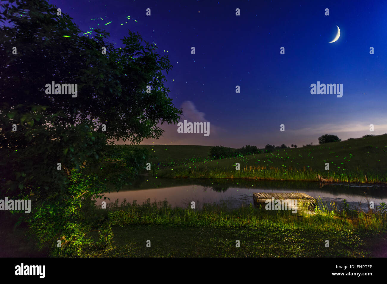 Lightning bugs in late spring over a meadow in Central Kentucky - Stock Image