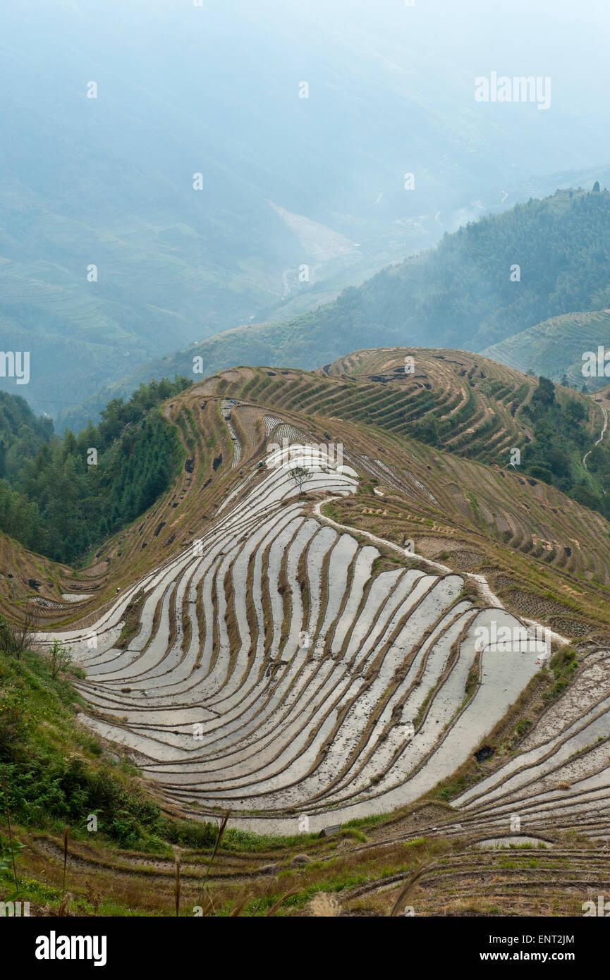 Longsheng rice terraces, Longji Terraced Fields, near Guilin, Guangxi Autonomous Region, China - Stock Image
